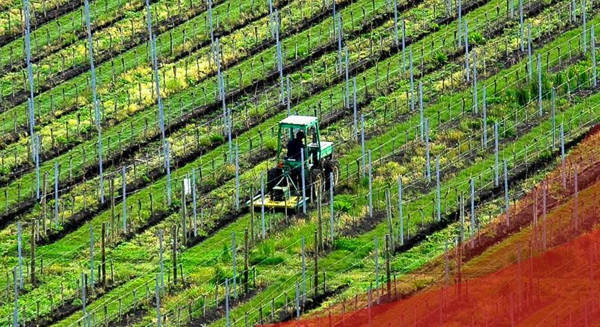 Protezione giuridica agricoltura